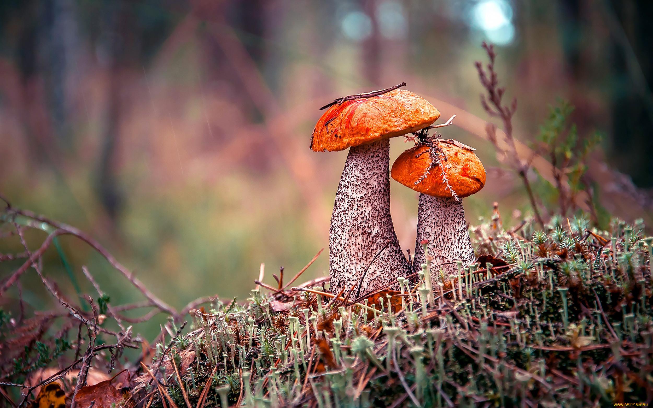 Грибы осенний лес картинки